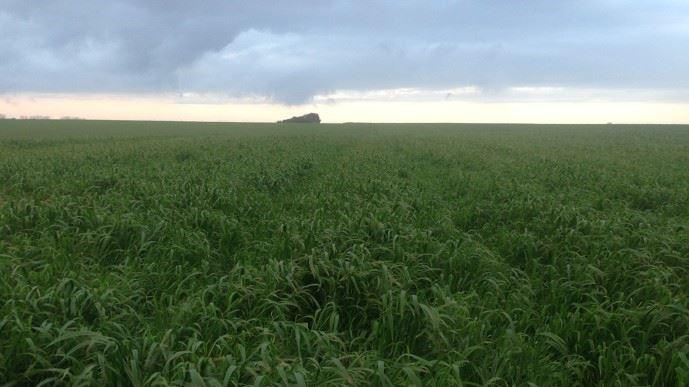 Les chercheurs étudient les plantes des prairies afin de lutter contre le changement climatique. (©TNC)