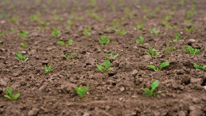Le Conseil d'État a validé la réautorisation provisoire des néonicotinoïdes dans la filière de la betterave sucrière (©DarkmoonArt Pixabay)