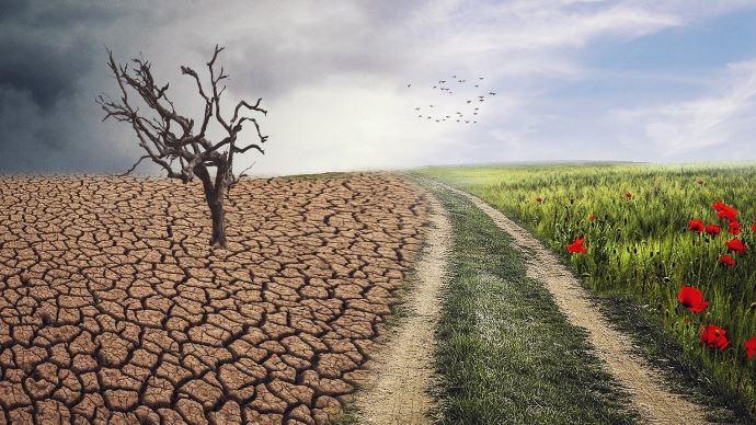 Score CO2 sur les produits, délit d'écocide, menu végétarien, artificialisation... plusieurs mesures ont trait à l'agriculture dans le projet de loi Climat. (©Pixabay)