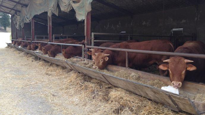 La disparition de ces aides mettrait en péril bon nombre de fermes allaitantes. (©TNC)