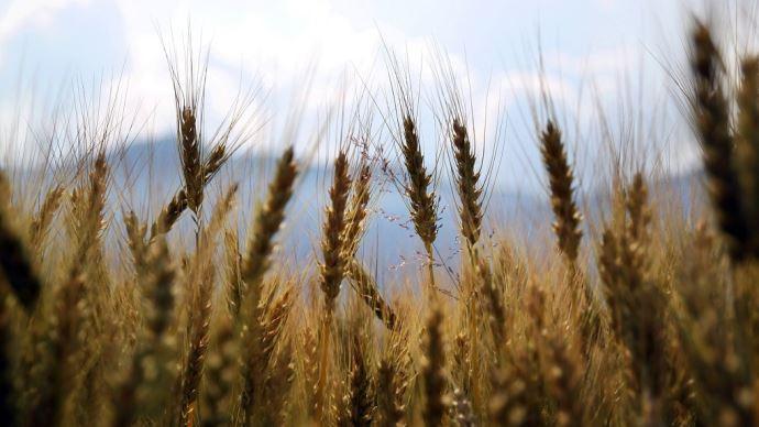 Sur les quelque neuf milliards d'euros d'aides européennes que touche chaque année la France, les «éco-régimes», un nouveau financement conditionné à des pratiques plus vertueuses, représenteront pas moins de 1,6 milliard d'euros, soit environ un quart des aides directes que touchent les agriculteurs. (©Pixabay)