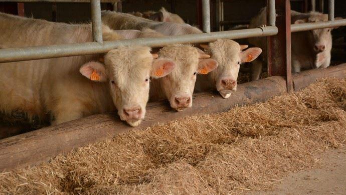 CIWF France veut remettre l'élevage au cœur des enjeux climatiques (©TNC)