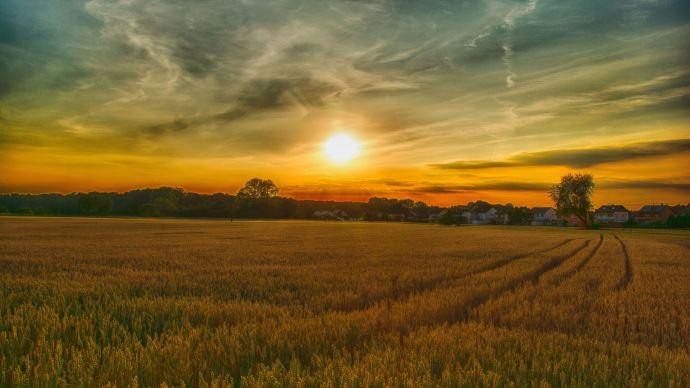 Quelles solutions pour faire face au changement climatique? (©Marion Wellmann de Pixabay)