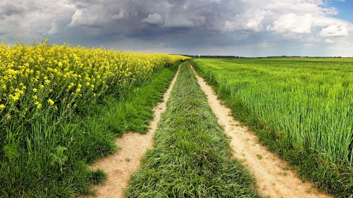 Entre céréaliers et éleveurs, la coopération ne présente que des avantages si elle est bien menée. (©Fotolia)