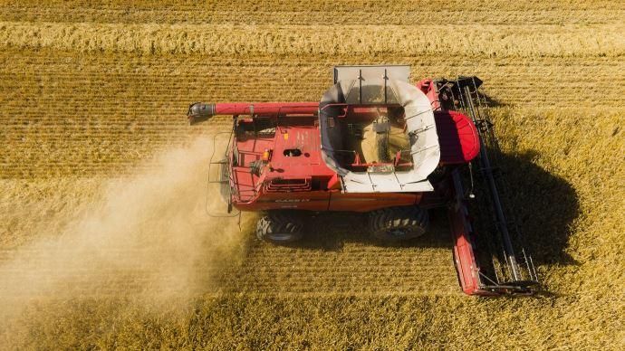 De nouveaux records de production de céréales pourraient s'enchaîner dans les prochaines années, selon le Conseil international des céréales. (©TNC)