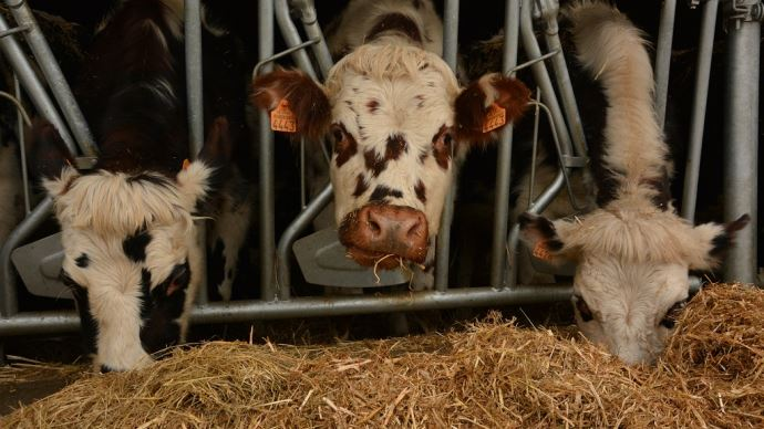 Le programme Cap protéines devrait prochainement donner plus de pistes aux éleveurs pour améliorer leur autonomie alimentaire. (©TNC)