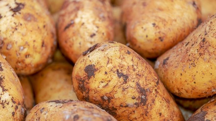 Depuis le début de la campagne 2020-2021, les exportations françaises cumulent 1,3 million de tonnes de pommes de terre. (©Pixabay)