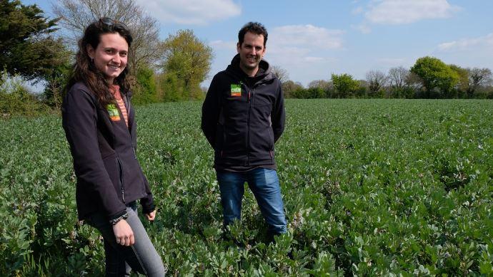 Franck Renolleau, polyculteur-éleveur et co-président du Grapea, et Tiphaine Terres, animatrice du Grapea, dans une parcelle de féverole et blé associés. (©Nathalie Tiers)