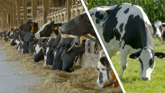 D'un point de vue technique, la production laitière est supérieure en système maïs mais la marge semble supérieur en système herbager. (©Idele)