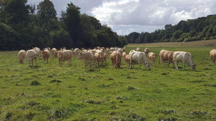 Le foncier et le cheptel font grimper le capital à investir pour une installation en bovins viande. (©TNC)