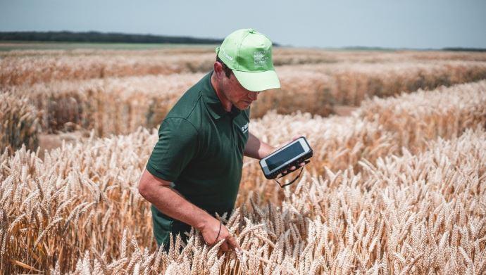 La mise en marché du blé hybride Ideltis est prévue «à partir du milieu de la décennie pour l'Europe et l'Amérique du nord», ont annoncé les équipes BASF. (©BASF)
