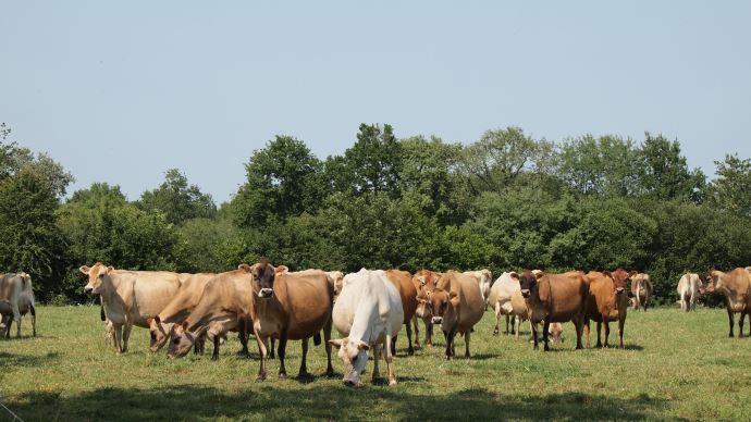 S'orienter vers une ferme laitière bas carbone. (©TNC)