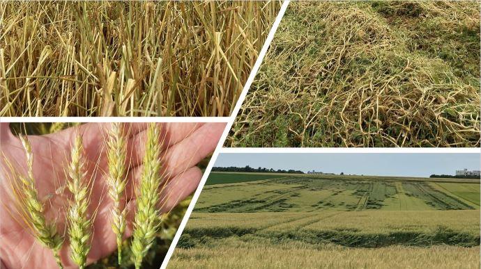 Sur le terrain, dans de nombreux secteurs, les dégâts sur les cultures causés par les récents orages sont très importants. (©TNC)