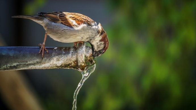 La qualité de l'eau en France a progressé ces dernières années. (©Pixabay)