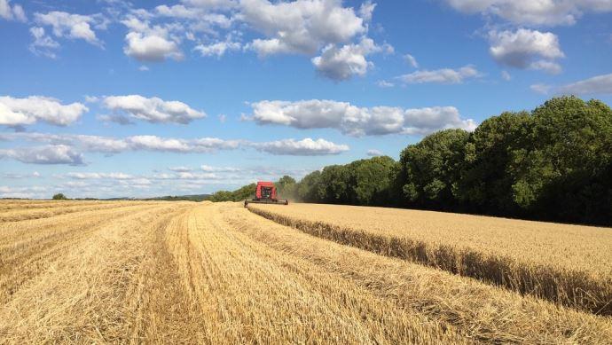 Arvalis-Institut du végétal et Intercéréales publient, pour la première fois, une estimation du rendement national en blé tendre. (©TNC)