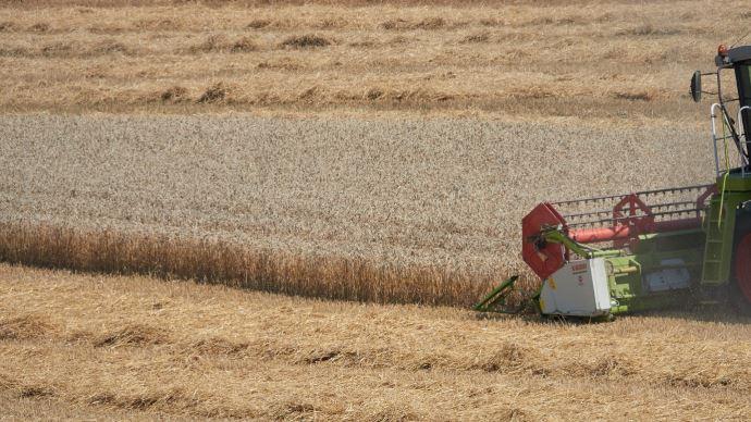 Alors qu'au 5 juillet, seulement 1% des blés tendres étaient récoltés, le rendement moyen est envisagé par les services du ministère de l'agriculture à 75,1q/ha. (©Pixabay)