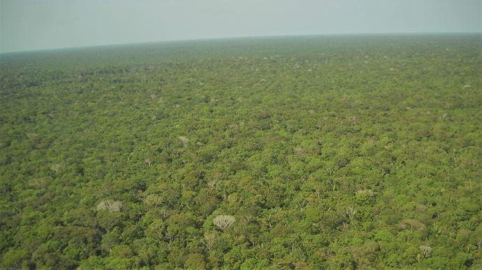 Duralim lance un Observatoire pour connaître exactement la part de soja brésilien importé responsable de déforestation. (©Pixabay)