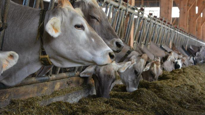 Le SNIA évoque une situation complexe pour les filières d'élevage en raison de la hausse des cours des matières premières utilisées en alimentation animale. (©TNC)