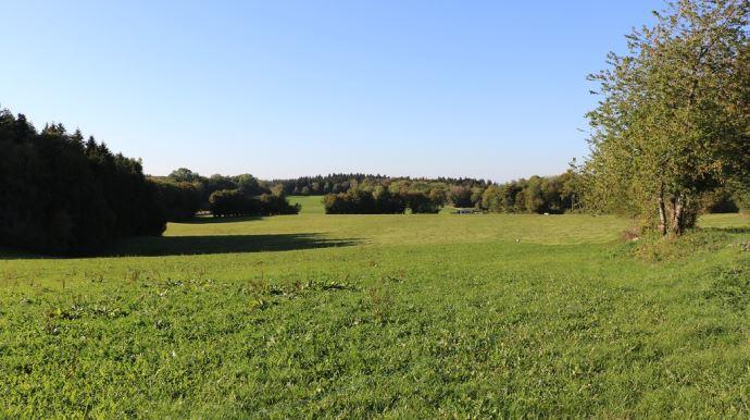 L'élevage à l'herbe permet de compenser les émissions de méthanes des bovins. (©TNC)