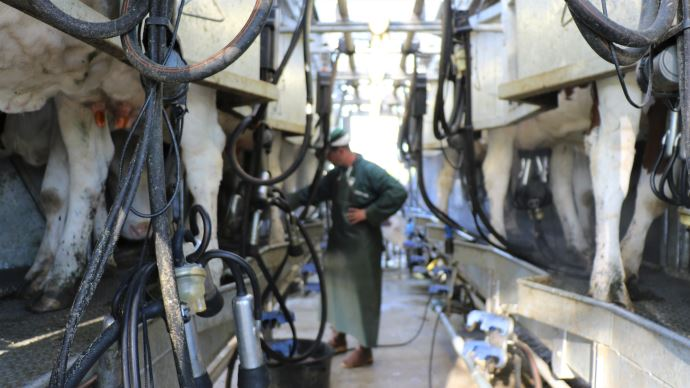 La progression de la production laitière est surtout marquée aux USA et en Nouvelle-Zélande (©TNC)