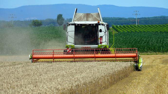 Le volume mondial de grain récolté serait en hausse de 3% par rapport à l'an dernier. (©Pixabay)