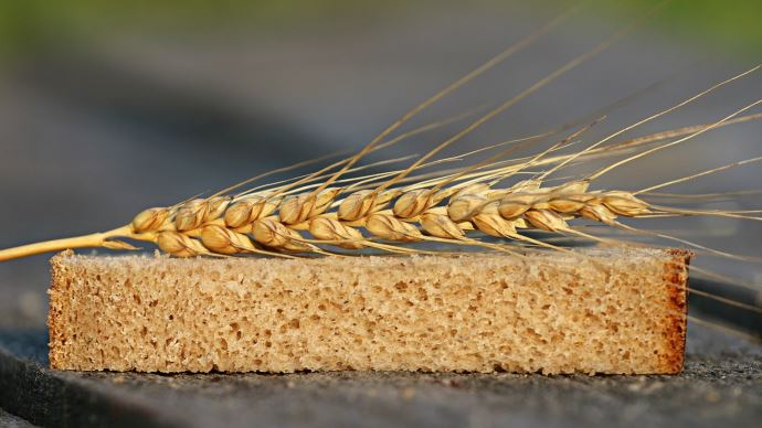 La bonne qualité de la récolte de blé tendre 2021 a été néanmoins pénalisée par des niveaux de poids spécifiques décevants. (©Pixabay)