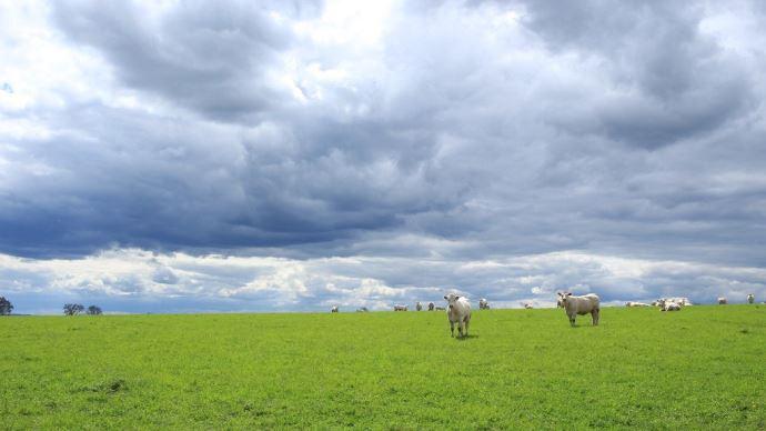L'empreinte carbone nette d'un système naisseur bovin viande est de 11,2g éq.CO2parkg de PBVV.(©Pixabay)