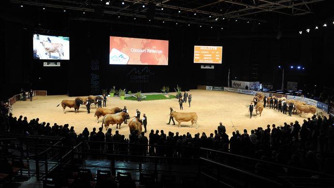 Entre le ring lait et le ring viande, les concours s'enchainent au Sommet de l'élevage. (©Sommet de l'élevage)